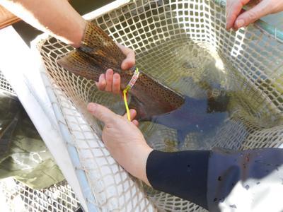 Fish adn Game extends 2020 steelhead bag limits