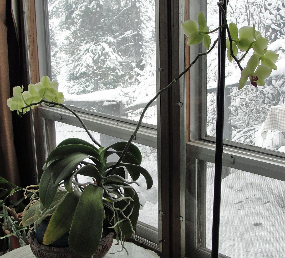 Elk City news orchid