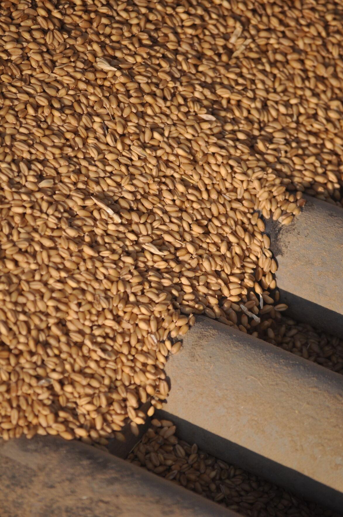 Unloaded grain photo
