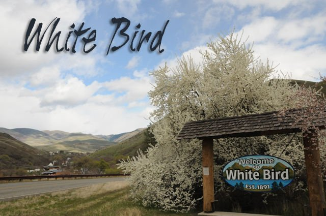 White Bird News