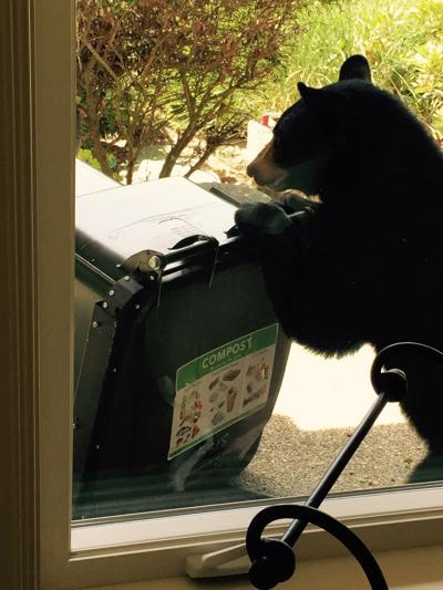 bear in bin