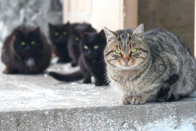 Cats outside feral - vapi-RF.jpg