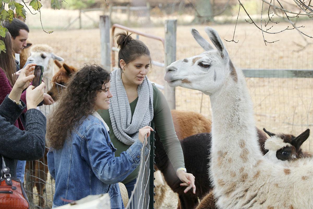 Alpaca 2019 - Randa Courtney Kiska_3576.jpg