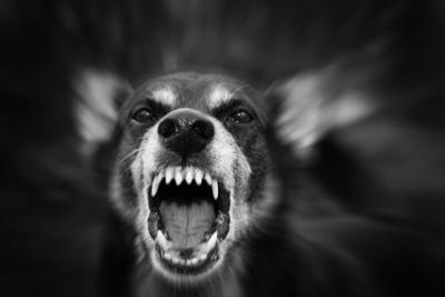Animal Control Ordinance