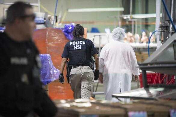 poultry raid by ice