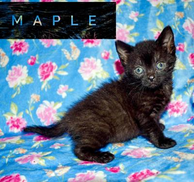 Pet of the Week Maple