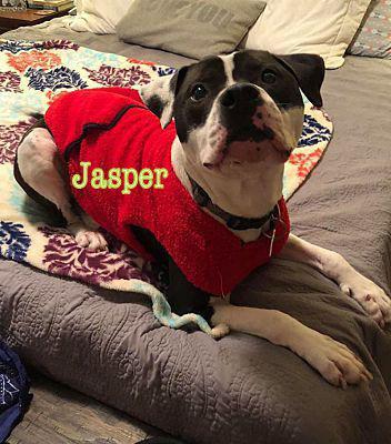 Pet of the Week Jasper