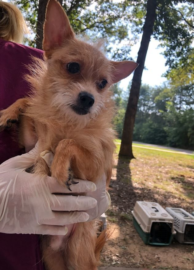 Over 60 dogs seized from Rowan County home