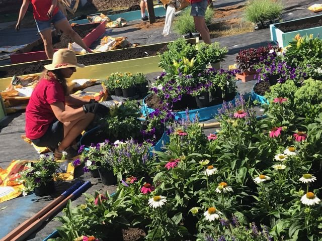 Pitts School garden