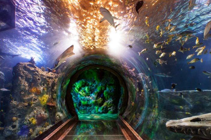 Concord Aquarium Construction To Start In July News: concord mills mall aquarium