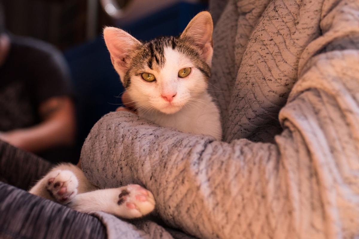 Mac Taby Cat Café