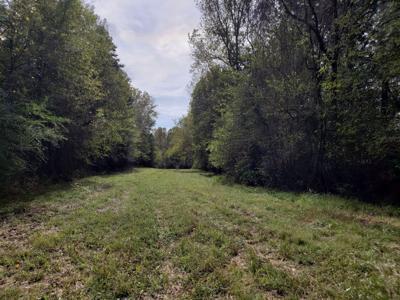 Irish Creek Buffalo greenway.jpg