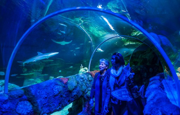 Fishing For Tourism Sea Life Opens News