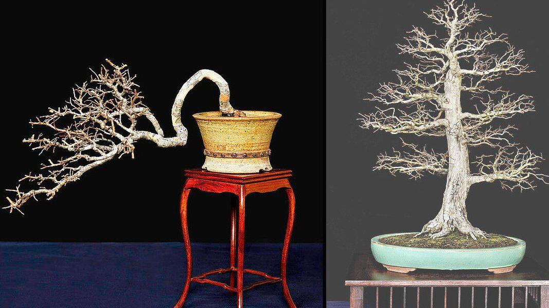 Winter Silhouette Bonsai Show This Weekend At Nc Research Campus Cit Independenttribune Com