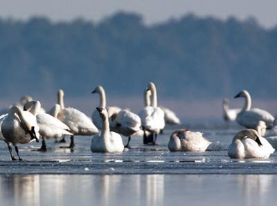 Pocosin Lakes