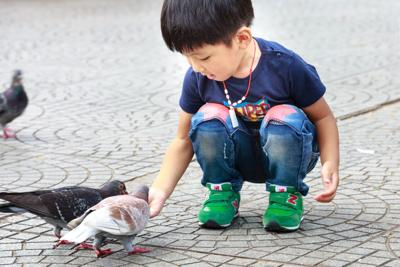kid with pigeons