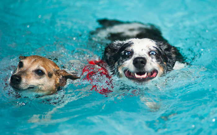 Swimming, bedtime stories part of dog's life at Harrisburg