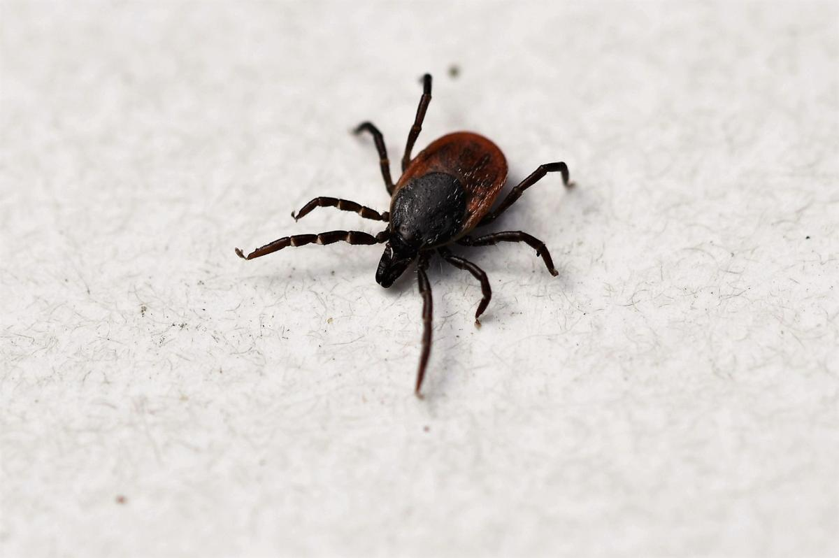 Taking care of a tick bite | Lifestyles | independenttribune.com