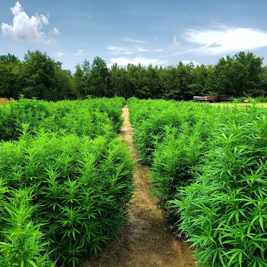 Piedmont Green
