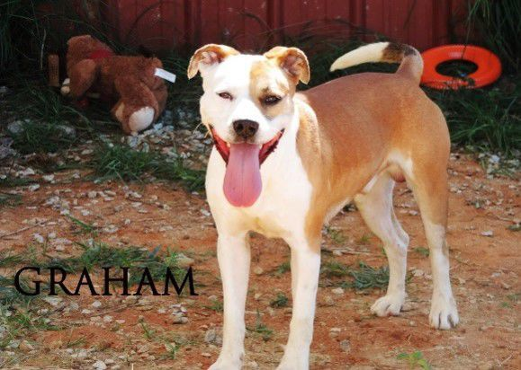 Abbeville Humane Society Pet of the Month