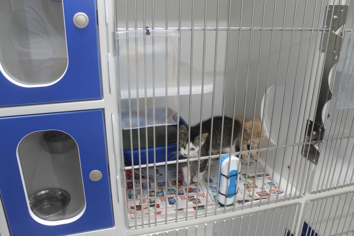 Abbeville shelter kittens