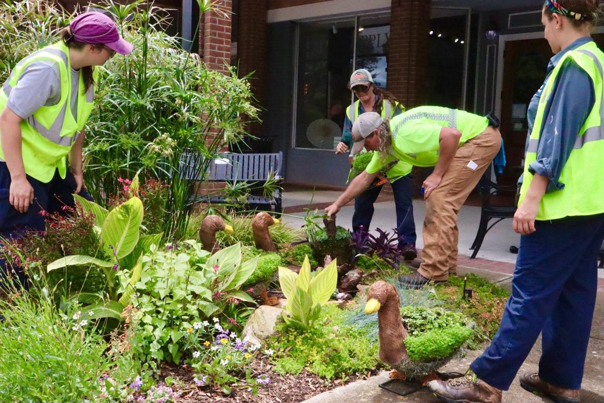 City of Greenwood horticulturists place duck topiaries in landscaped bed