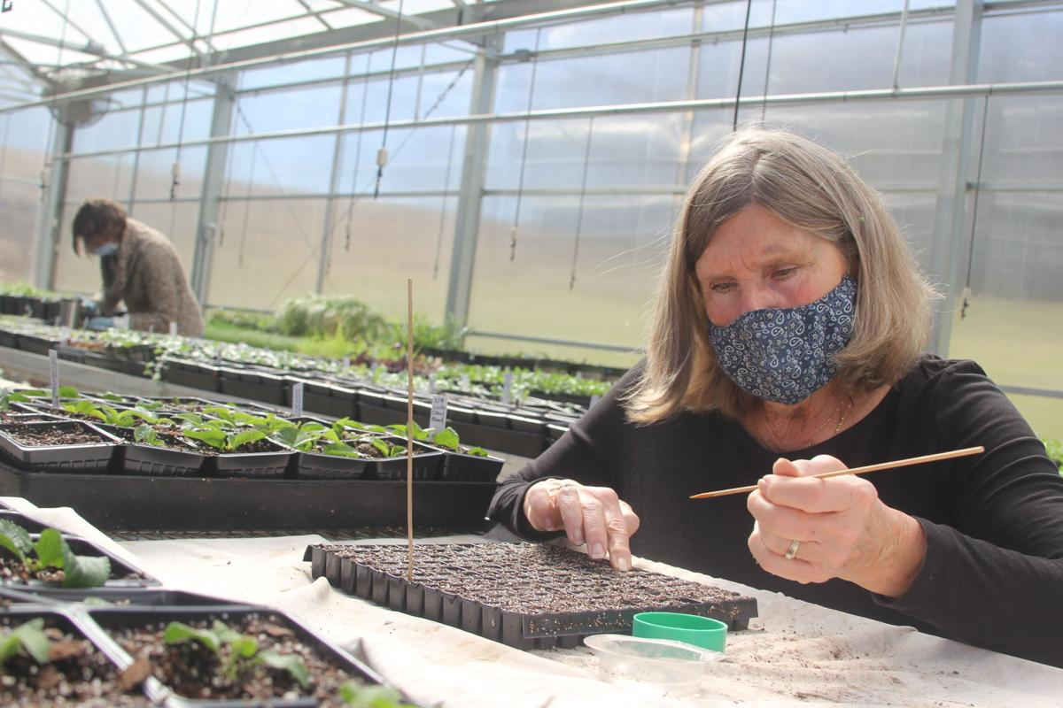 Horticulture 01
