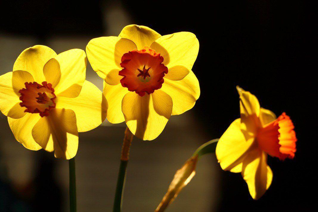 Flowers outlast us