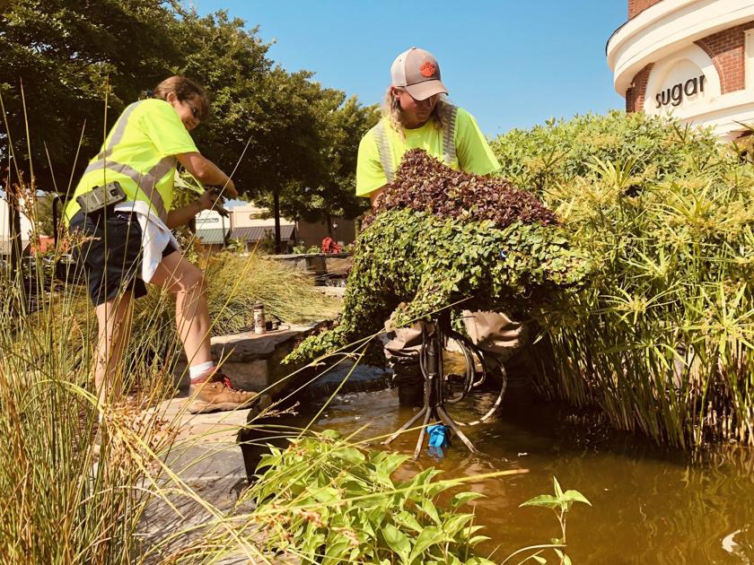 Photos City Horticulturalists Take Topiaries Uptown News