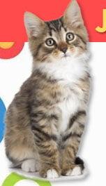 Humane Society of Greenwood hosting Kitten Palooza adoption event
