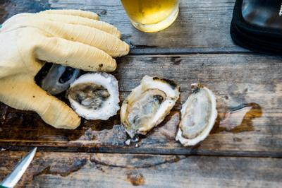 Oysters:  A love story