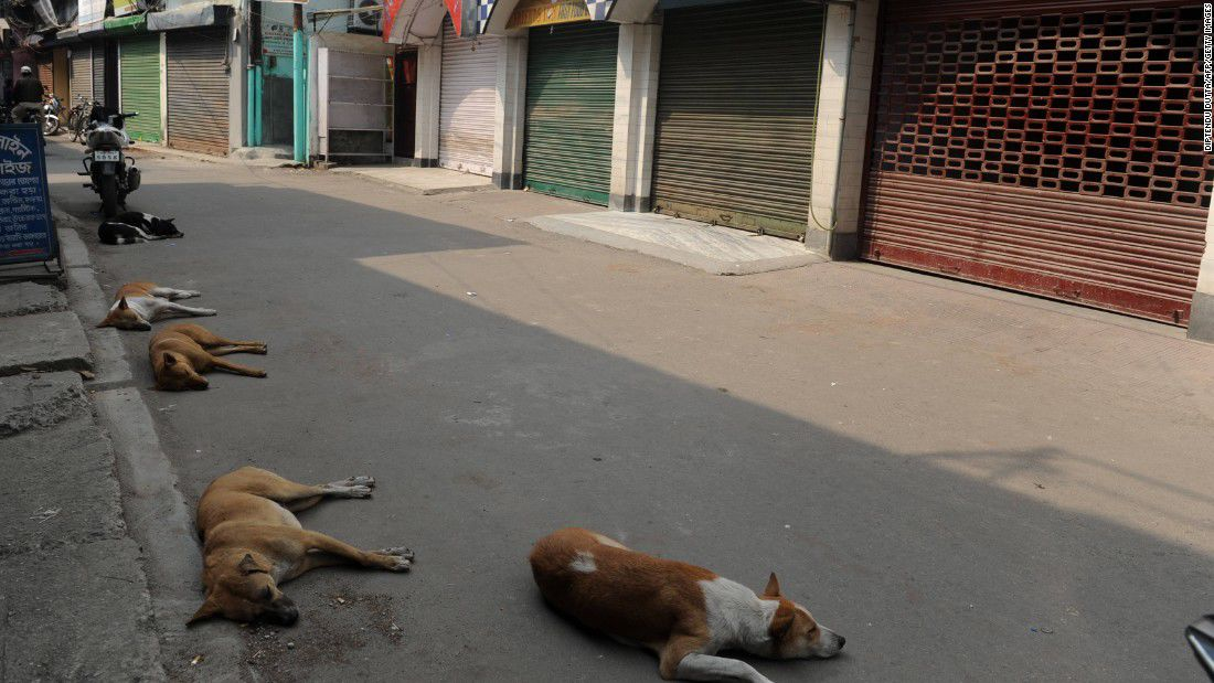 Newborn mauled to death by dogs at India hospital