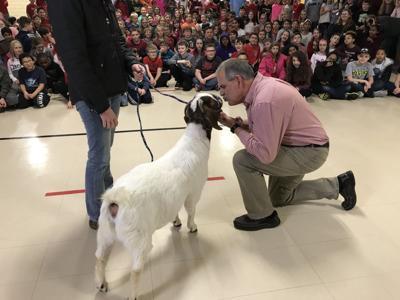 Teacher kisses goat