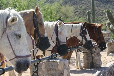 Horses join the party at Tanque Verde Ranch