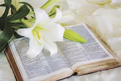 Easter lily Bible