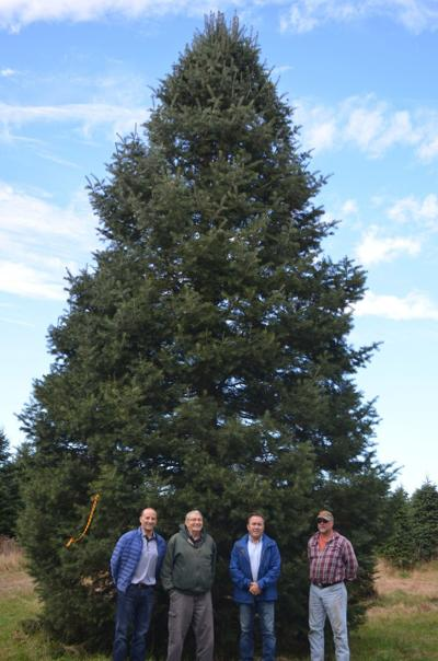 Christmas tree - Tree To Be Donated For Indiana's Lightup Celebration News