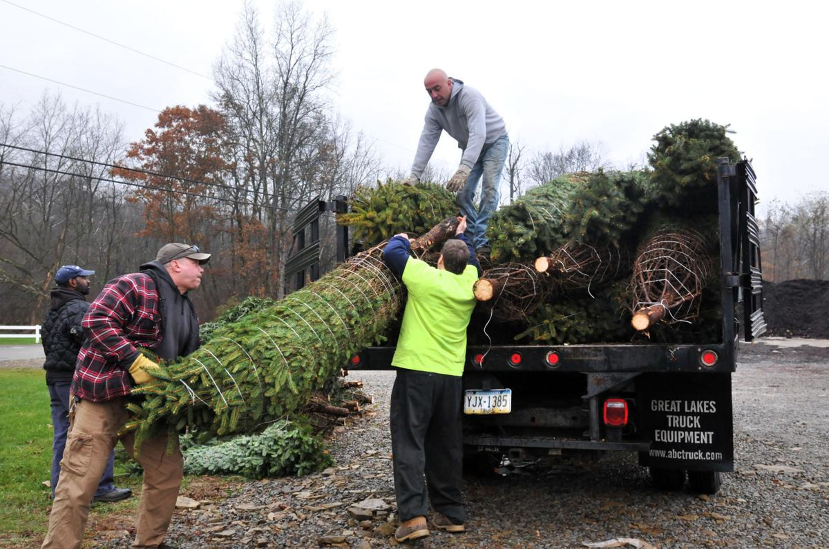 Sixty trees sent to Kennywood Park for holiday festival | News ...