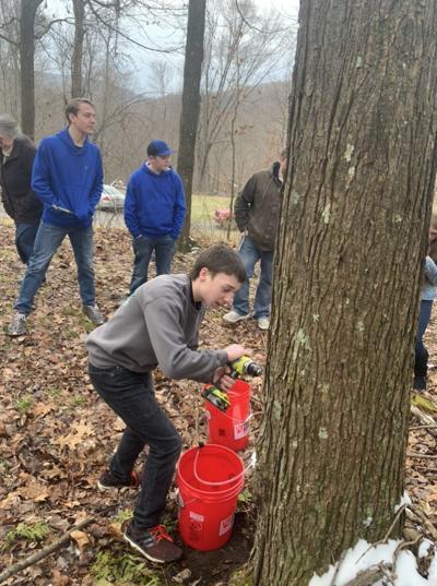Mahaffey Christian School tree sap