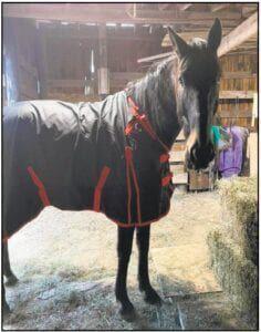 Armco Horse Update