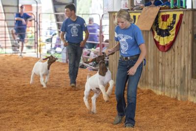 Goats on the go