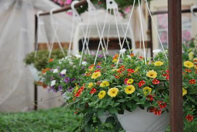 Mother's Day hanging baskets at Parent Road Greenhouse
