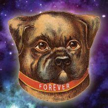 ForeverDog220