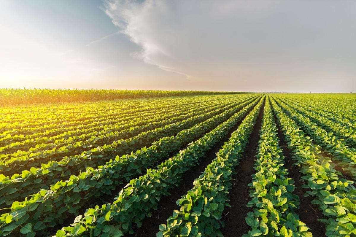 Agricultural-soy-plantation-on-sunny-day-scaled_c Global Minnesota