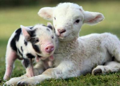 Some farm animal babies have unusual names | News ...