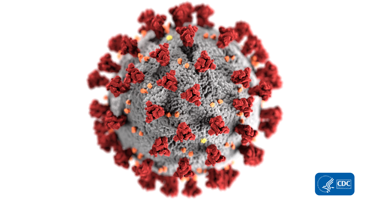 An illustration of the novel coronavirus