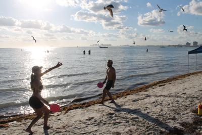 Bacteria hits the beaches