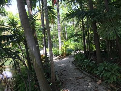 Key Biscayne Library garden oasis