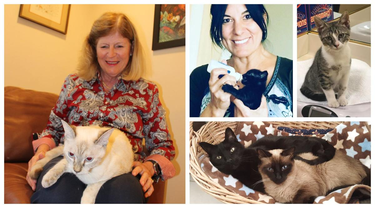 KB Community Cats Rescue Program holding annual fundraiser to support its work