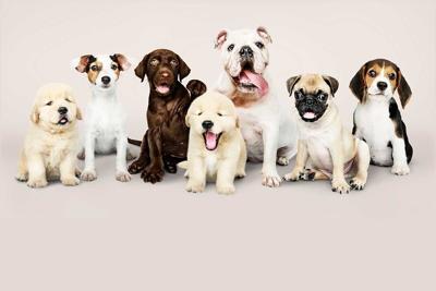 Prohiben entrada de perros a Estados Unidos