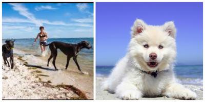Best 25 Dog Friendly beaches in Florida.jpg